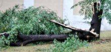 Orkán Herwart v Česku poničil nespočet stromů