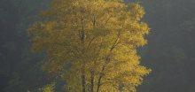 Silný vítr dnes a zítra zasáhne Moravu a Slezsko