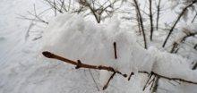 Na jihu se očekává vydatné sněžení, napadne 5 až 10 cm