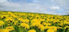 Znáte tyto 4 druhy alergie? A co pomáhá?