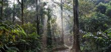 Se stoupající teplotou v tropech se z půdy uvolňuje uhlík