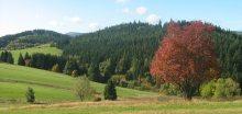Podzim se pomaličku hlásí o slovo