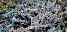 Po ránu bylo mnohdy velmi chladno, Šumava hlásí jen -5°C