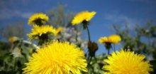 Radostná zpráva: Čekají nás pěkné jarní dny, bude 20°C
