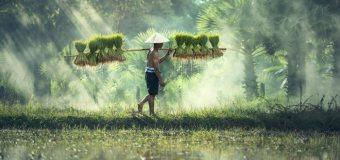 Počasí v Kambodži